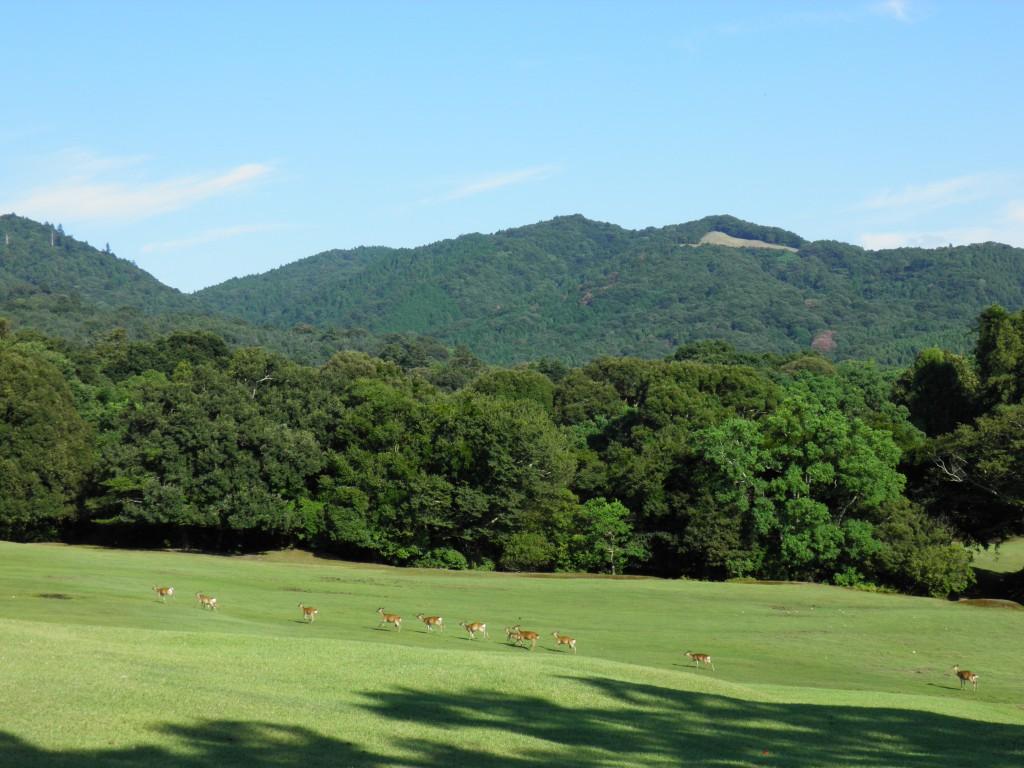 【飛火野】奈良公園内最大の「芝生広場」は今も昔も「鹿たちの楽園」
