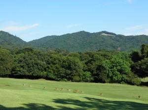 【奈良公園】広々とした鹿たちの楽園「飛火野」ってどんなところ?四季の風景を写真でご紹介!