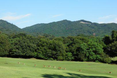 飛火野(奈良公園)