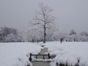【カメラ日和】奈良の「天気・気候」の特徴ってどうなってるの?【春夏秋冬】