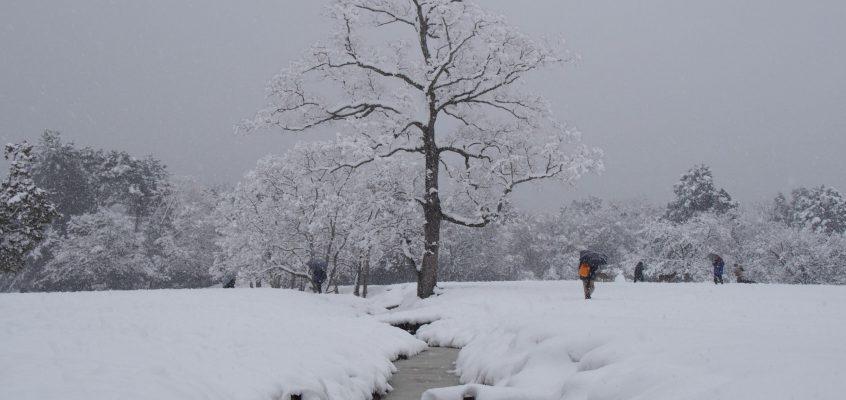 【奈良に住む】奈良の「天気・気候」の特徴ってどうなってるの?【春夏秋冬】