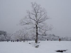【写真多数】奈良の貴重な「雪景色」を撮り歩き(奈良公園・東大寺・春日大社など)