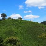 シダが生い茂る若草山