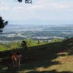 若草山頂から京都方面を望む