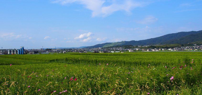 【山村町バス停周辺の田園風景】山辺の道近くに広がる若草山方面を一望する美しい風景