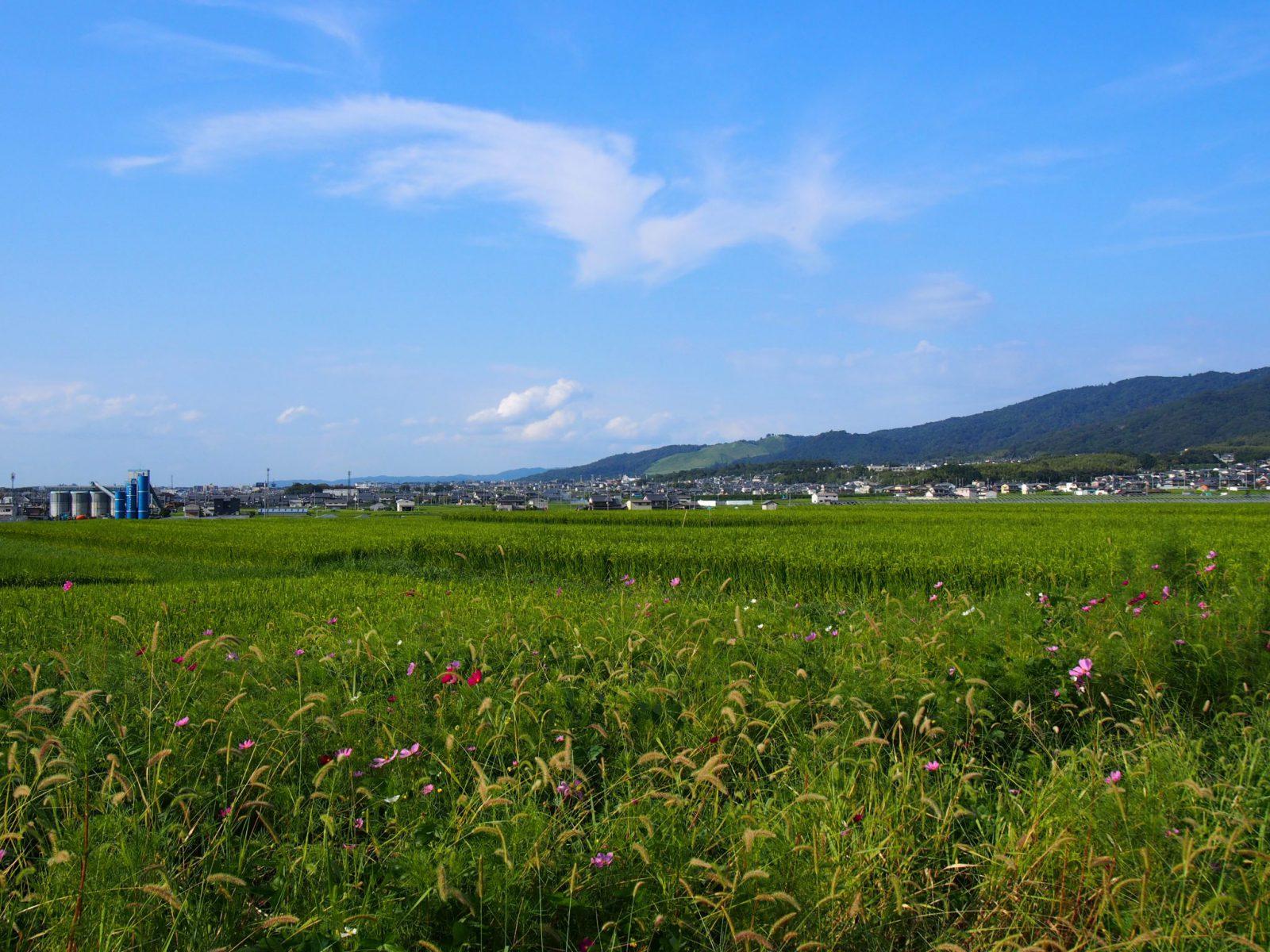 山村町バス停周辺の田園風景