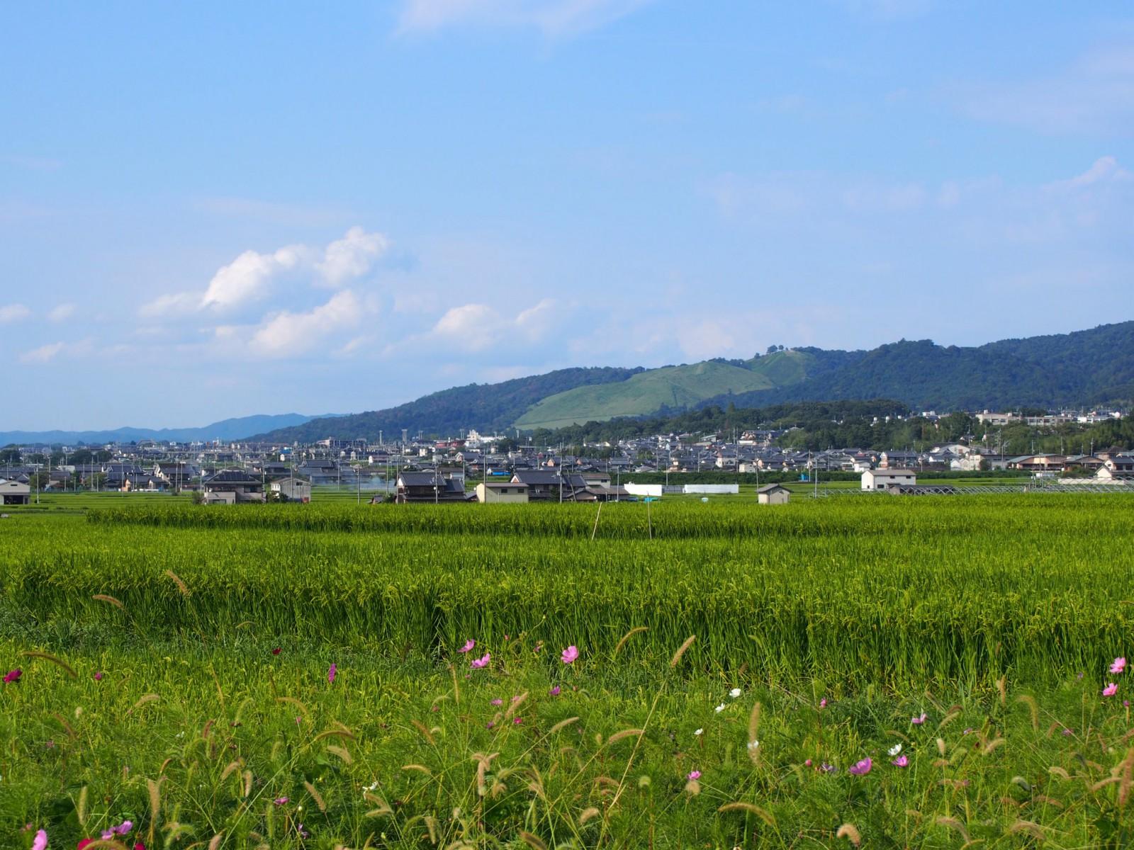夏の終わりの「山村町」バス停付近からの眺望風景