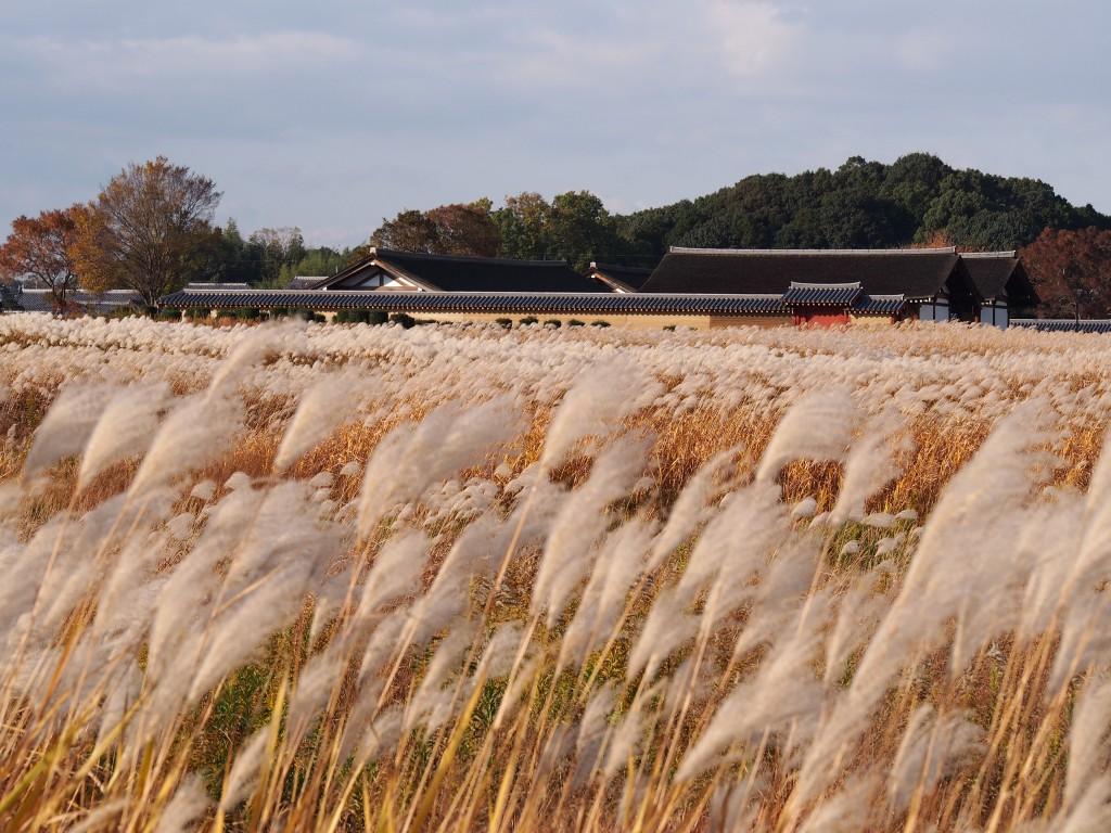 【奈良】電車からも見える秋の風物詩「平城宮跡のススキ」を味わおう!【写真多数】