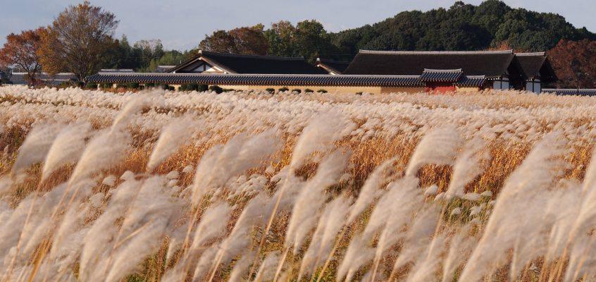 【平城宮跡】かつての日本の首都=奈良の都の中心部は広々とした草原が広がる