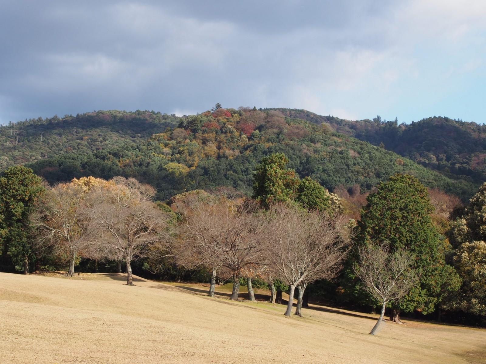 晩秋の御蓋山