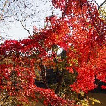【地獄谷新池】新緑や紅葉が実に美しい春日奥山エリアでは唯一の大きな水辺