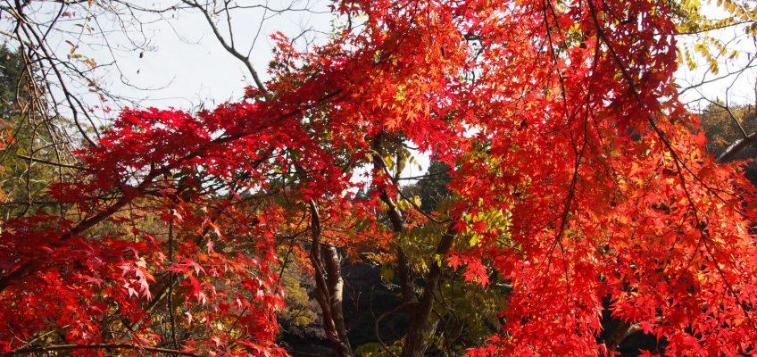 地獄谷新池の紅葉