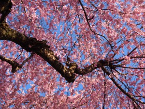 【佐保川沿い】桜の名所として知られる「大仏鉄道記念公園」ってどんなところ?【幻の鉄道】