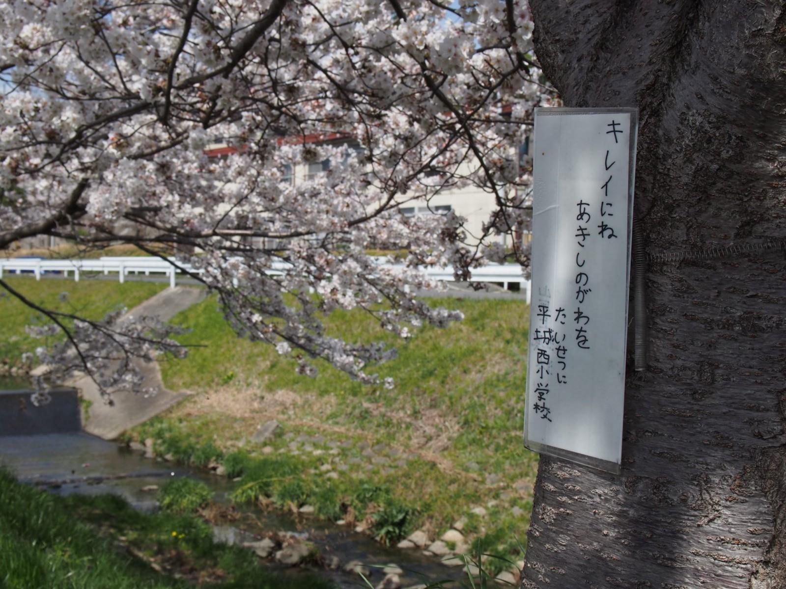 地域の力で彩られる秋篠川の桜