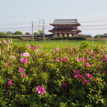 奈良「平城宮跡」でご覧頂ける「花」と「自然」のご案内
