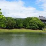 大仏池の初夏