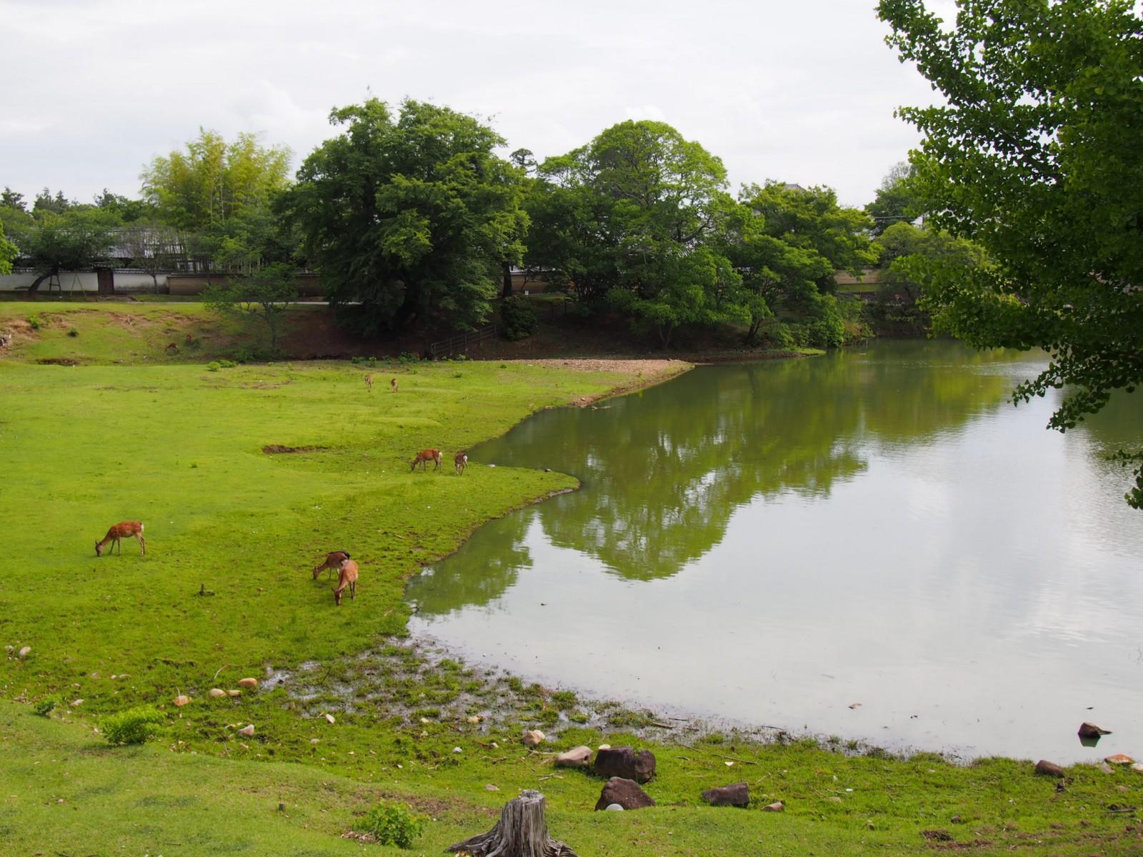 大仏池の水辺