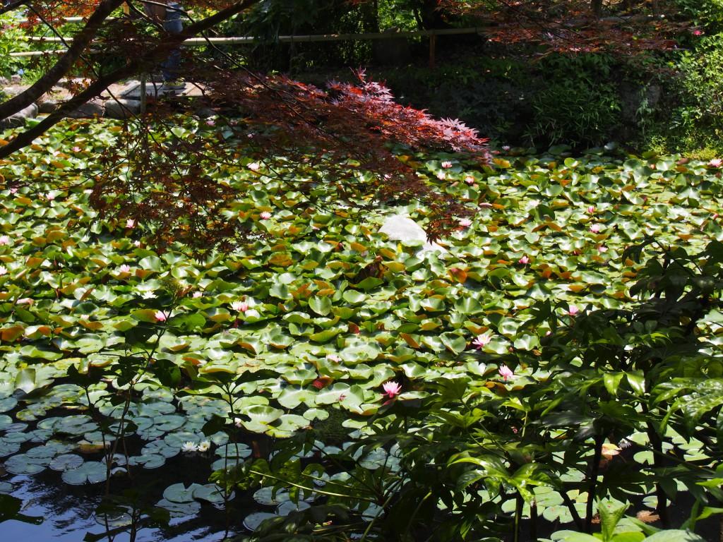 柳生花しょうぶ園の「水辺」