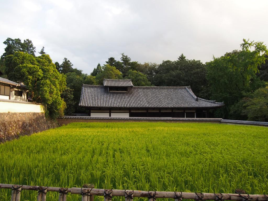 大湯屋と稲刈り前の二月堂供田