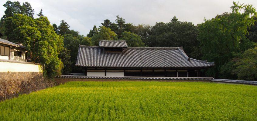 【二月堂供田(東大寺)】お水取り行事などに用いられるお米を栽培するお寺の「田んぼ」