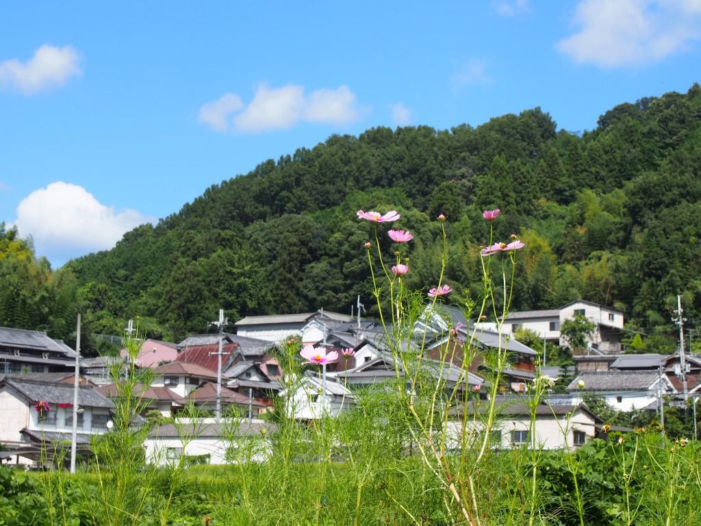 高樋集落と周辺の田園風景