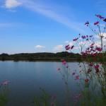 秋の水上池