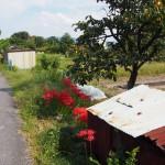 歌姫町の田園風景