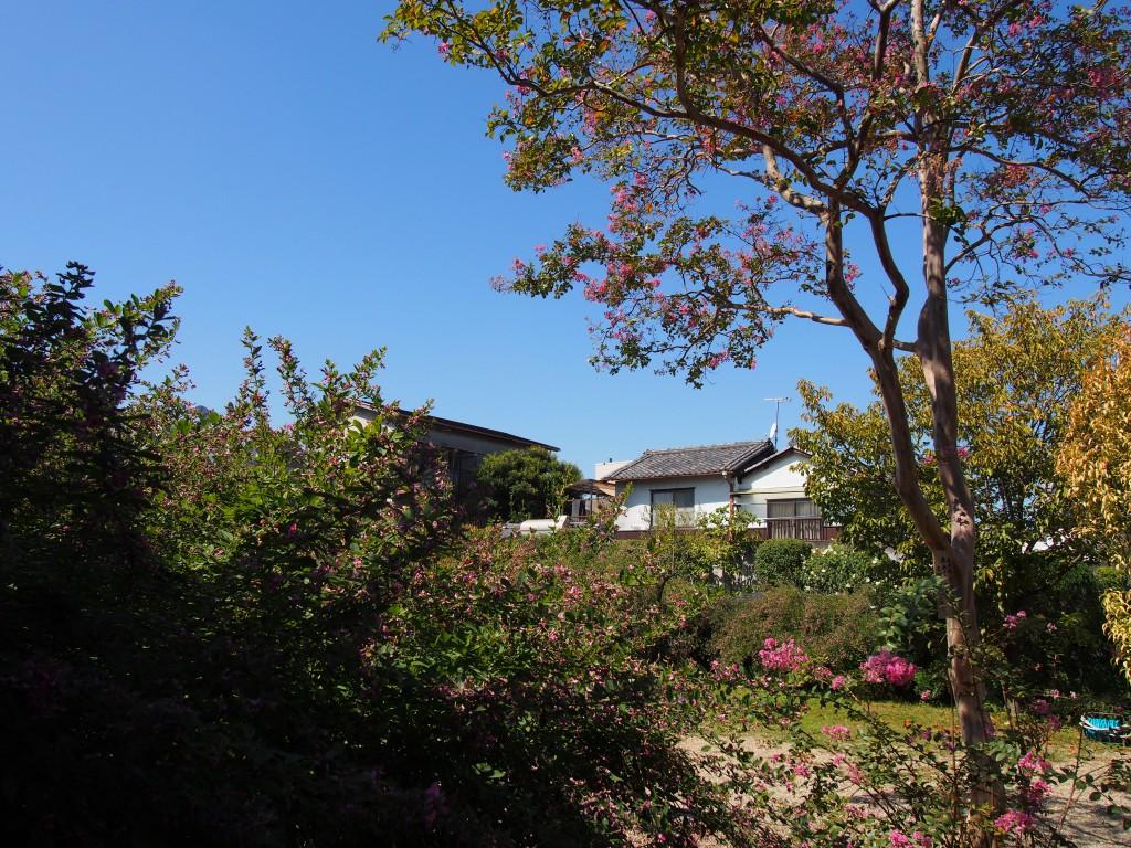萩の名所「元興寺」