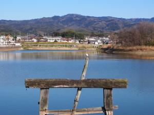 【奈良・帯解】聖徳太子ゆかりの「広大寺池」ってどんなところ?【コウノトリ】