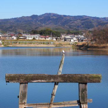 【広大寺池】コウノトリがやってきた「聖徳太子」ゆかりの池