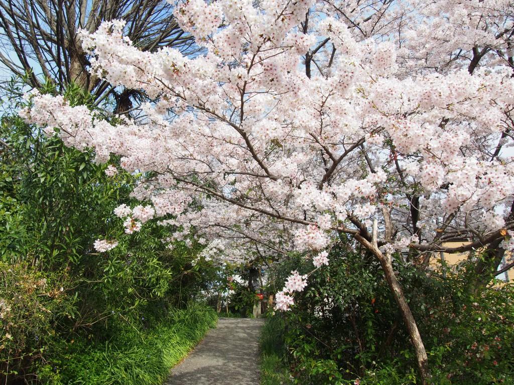 【元興寺小塔院跡】桜が美しい「ならまち」の穴場スポット