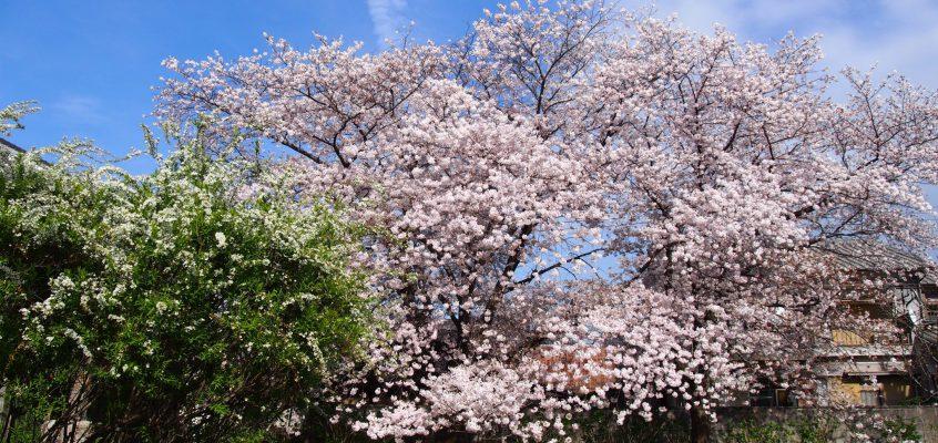 【元興寺塔跡】季節ごとの風景が美しい隠れた「花の名所」はかつての五重塔跡