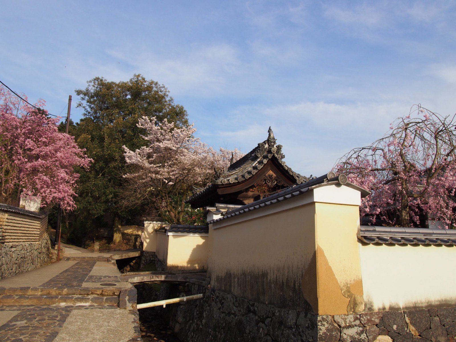 色とりどりの桜が美しい二月堂裏参道