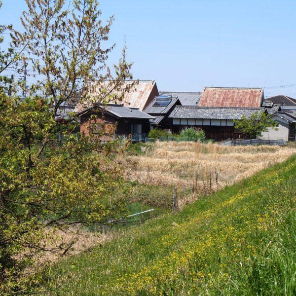 のどかな風景が続く山辺の道界隈(奈良道・鹿野園町)