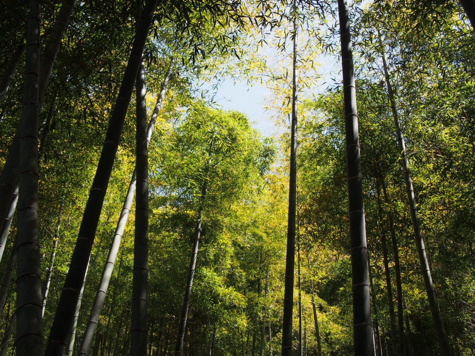 鹿野園町周辺の「竹林」(山辺の道・奈良道)