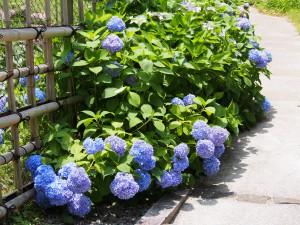 【奈良春日野国際フォーラム甍内日本庭園】季節ごとの風景を静かに味わえる奈良公園内の隠れた名所