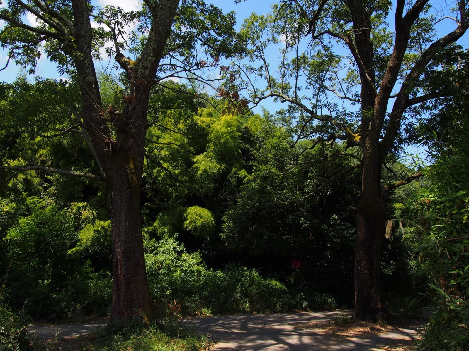 歌姫町の里山