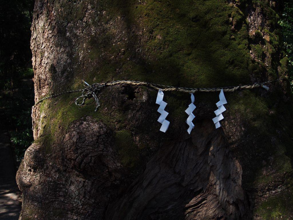 巨大な楠の神木にくくりつけられた注連縄