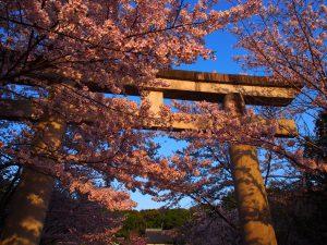 【奈良県護国神社】戦没者を祀る空間は「椿」と「桜」の名所としても知られる