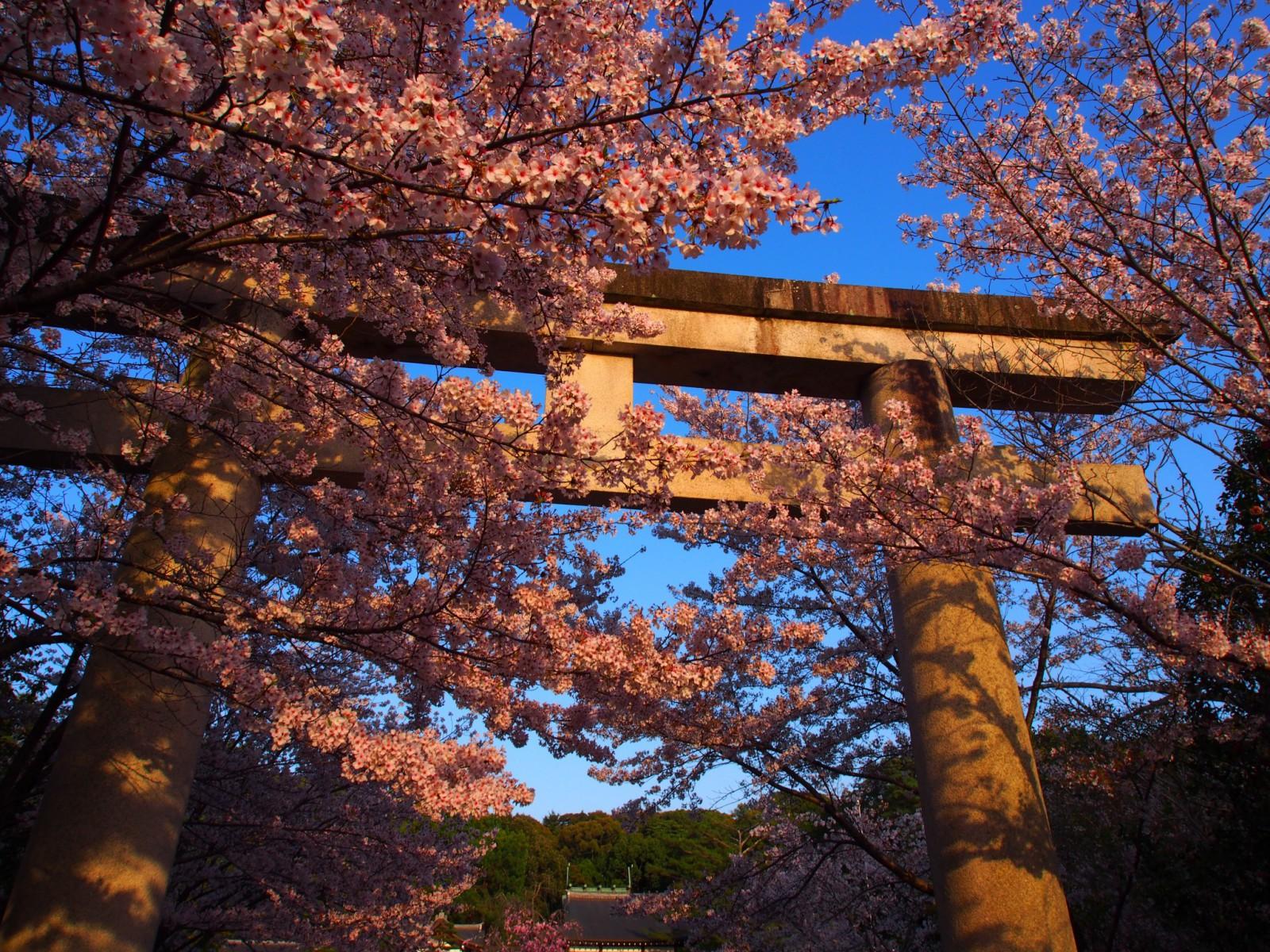 桜に包まれた奈良県護国神社