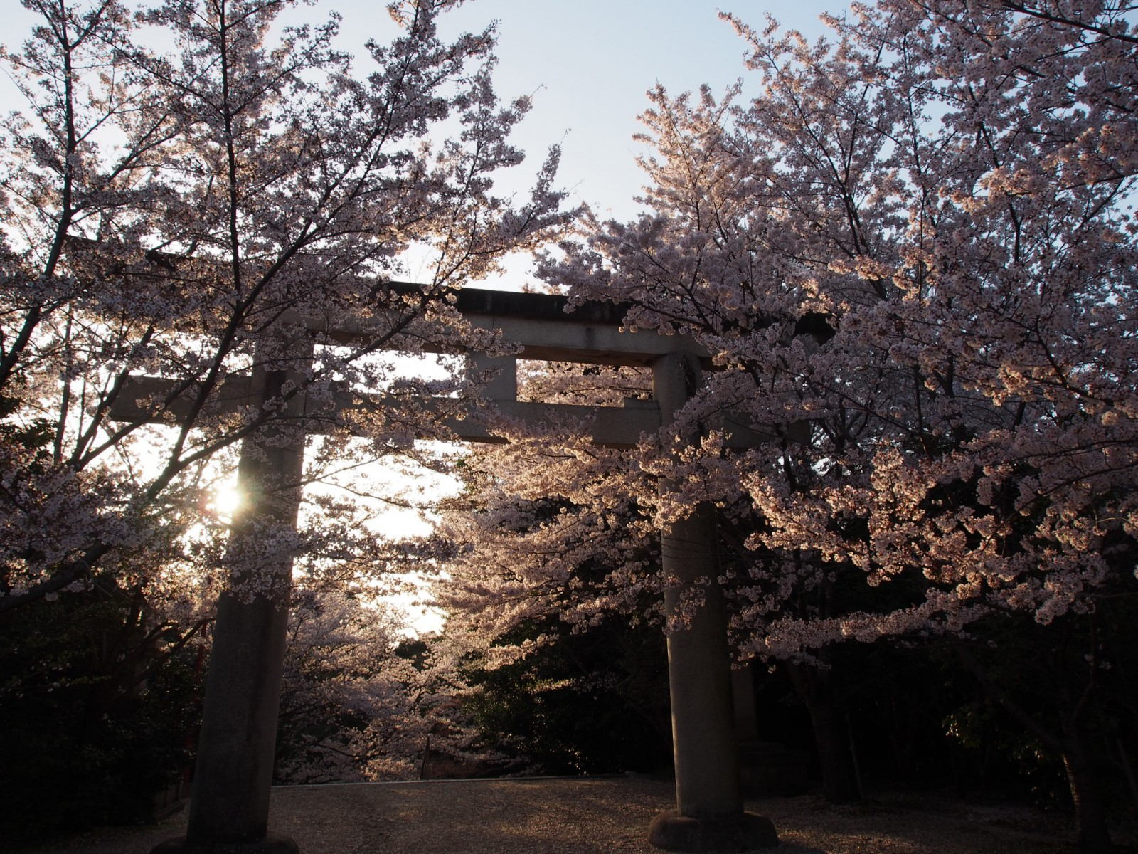 独特の「桜」ある風景を生み出す護国神社(奈良)