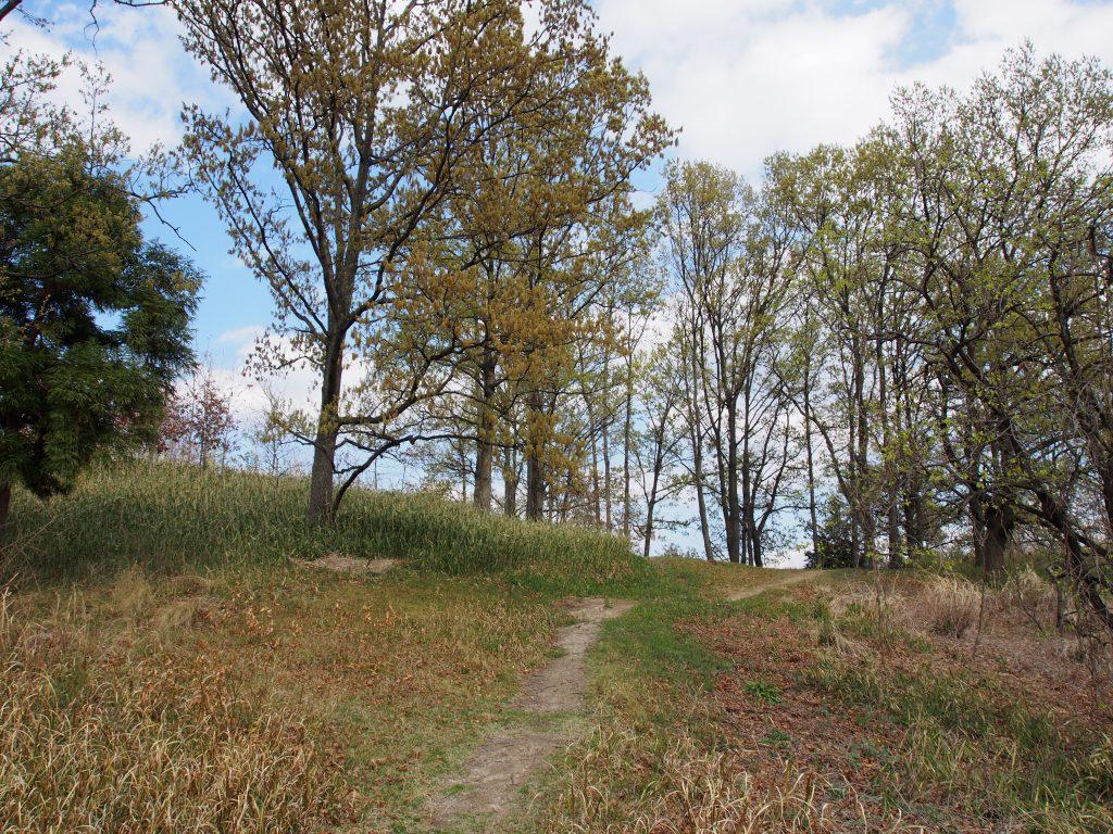 小道が伸びる大安寺杉山古墳の墳丘上
