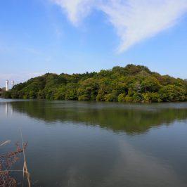 ウワナベ古墳(宇和奈辺陵墓参考地)
