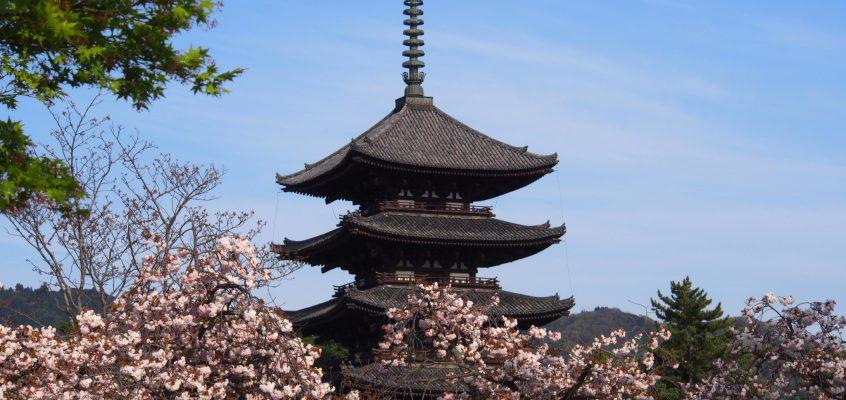 【興福寺の八重桜】五重塔をバックに4月末に咲き誇る奈良を象徴する桜の花
