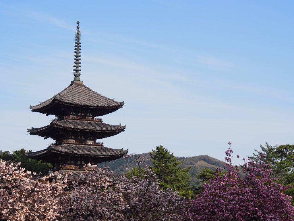 五重塔と奈良八重桜