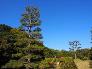 【奈良・佐紀路】美しい自然に包まれた「成務天皇陵」ってどんなところ?風景を写真でご紹介!
