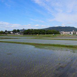 奈良・大安寺周辺の田園風景