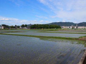 【奈良・大安寺】消えゆく農村の風情を感じる「大安寺周辺の田園風景」をご紹介