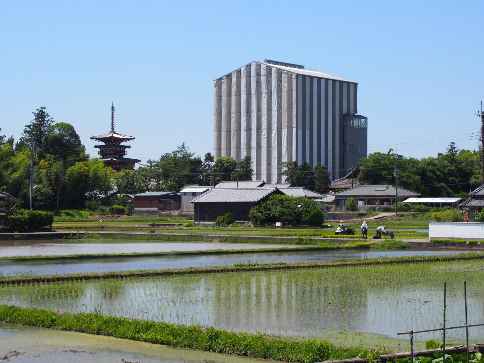 田植えの季節(薬師寺周辺)