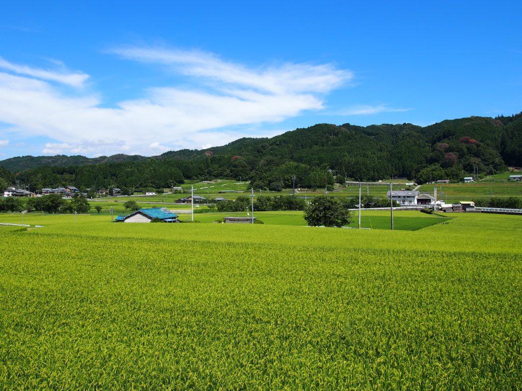 大柳生エリアの田園風景